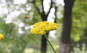 """Yarrow - Protection Against Evil"""